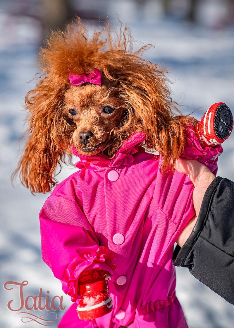 vetement chien QC, Canada photo