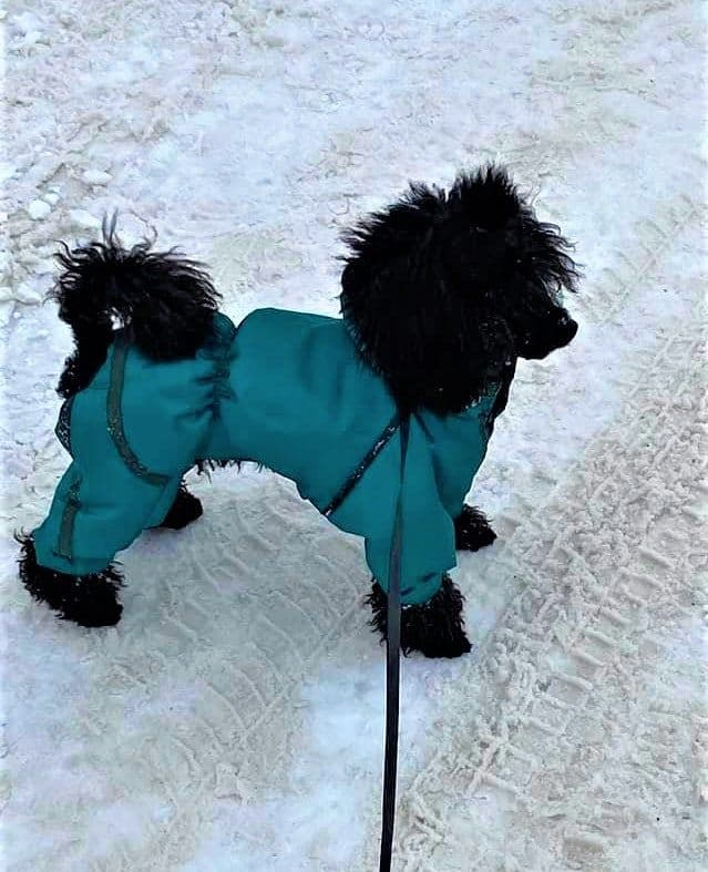 Dog snowsuit with feet Montreal
