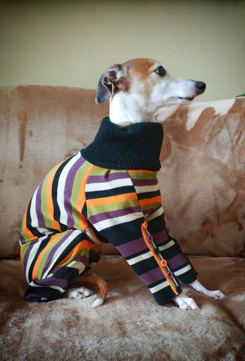 Pull pour chien Canada Montreal