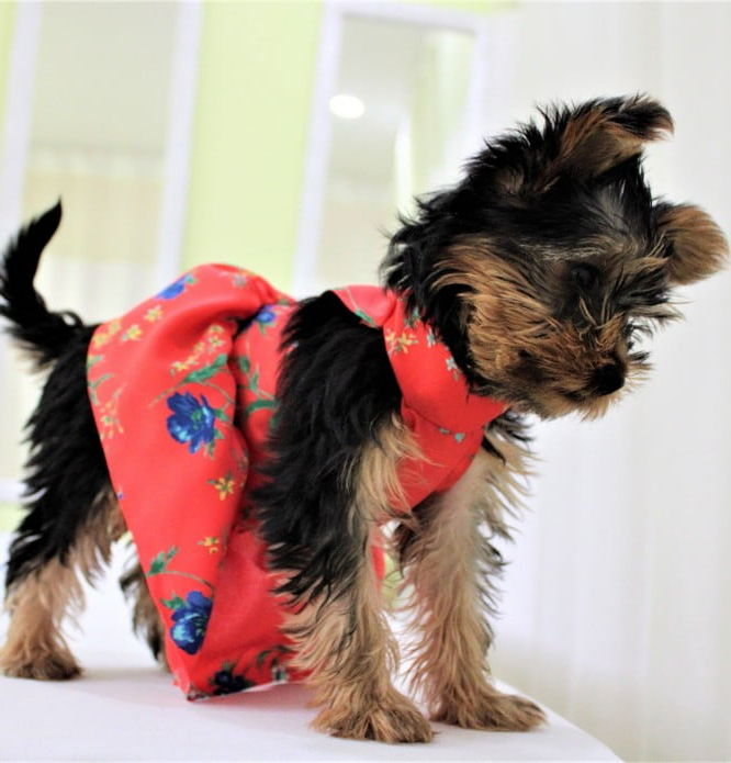 robe pour chien Canada Montreal